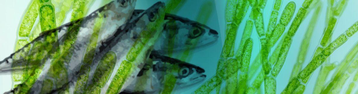Fish Oils & Omega Oils